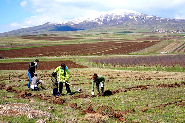 ATP planted another 58,200 trees at 134 sites this spring; volunteers are pictured here planting in the community of Aragyugh for Earth Day
