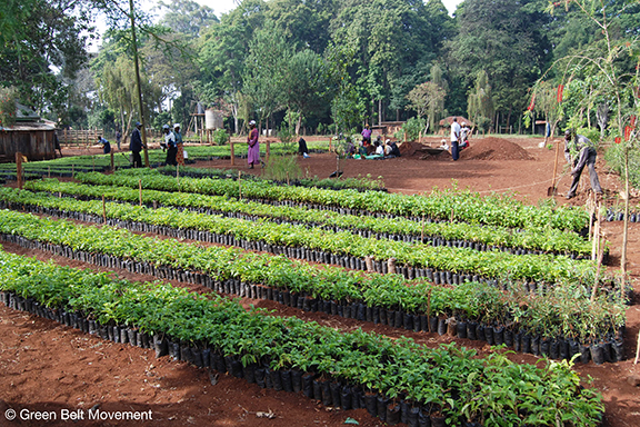 One of the Green Belt Movement's tree nurseries in Kenya; the organization's founder, the late Wangari Maathai, was awarded the Nobel Peace Prize in 2004